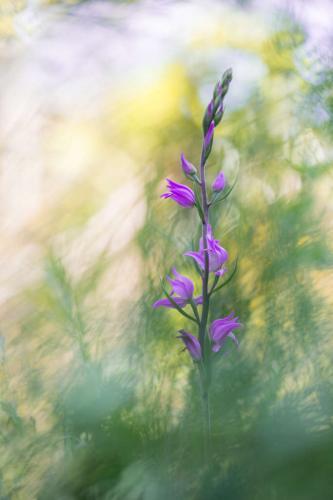 Remous floral